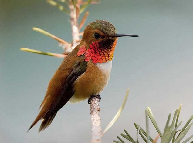 SPRING SEASON BIRD