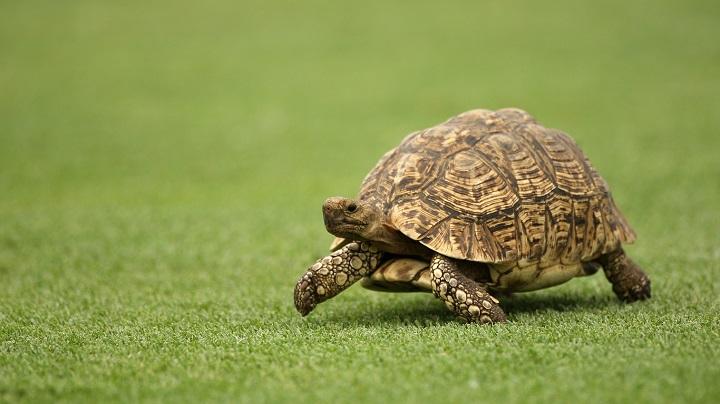 Animals With Longest lifespan