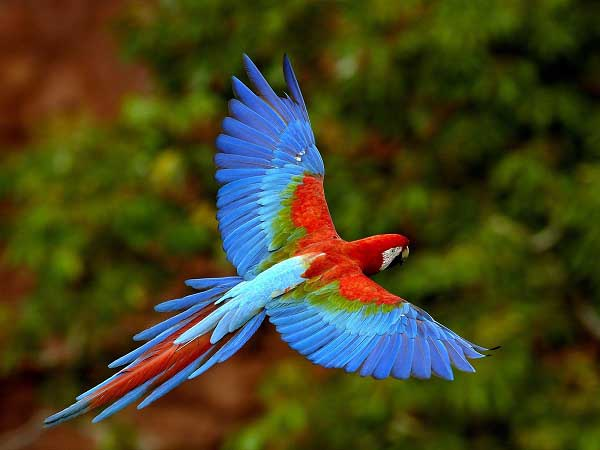 Macaw parrot images wallpapers images photos