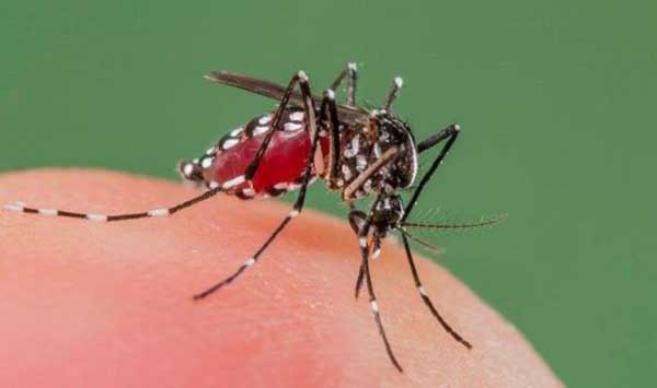 Mosquito bites images wallpapers