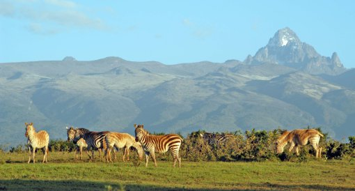 big-mount-kenya-white-zebra-Pictures