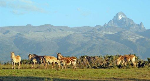 big-mount-kenya-white-zebra-Pictures