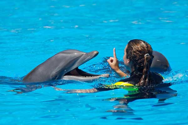 Dolphins in water swimming wallpapers images photos