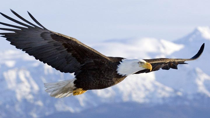 7 Thing to Know about Eagles