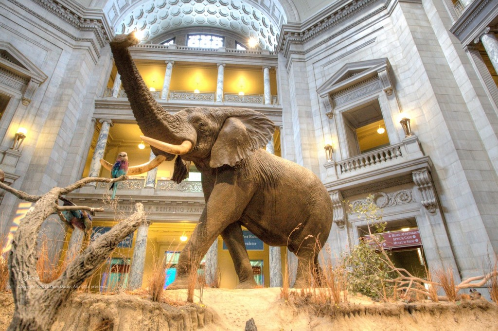10 Best places to visit in usa museum-of-natural-history-elephant-washington-dc
