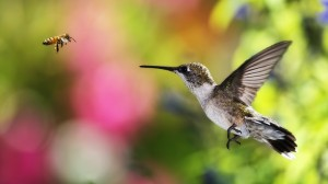 Top 10 Smallest Birds in the world